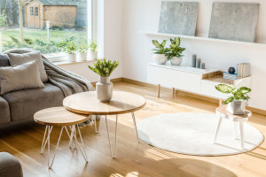 Fresh plants and flowers placed in bright living room interior w